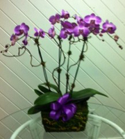 Orchid Delight