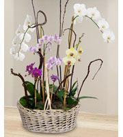 Blooming orchid garden