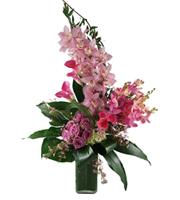 Fashionista Floral