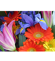 Flower of the Month-Free Delivery