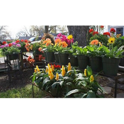 Plant of the Month-FREE DELIVERY