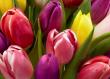Designer's Choice of Bright Seasonal Flowers