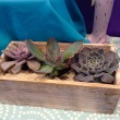 Succulent Garden in Wooden Planter Box