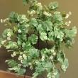 Leafy Greens Wreath