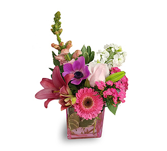 Flowers by bauers greenhouses fresh pink lemonade pick of the day fresh pink lemonade pick of the day color cube mightylinksfo