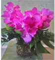 Enchanting Vanda Orchids
