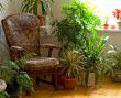 Green Plant 8