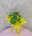 Bee Springy