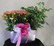 Lavender Dream Planter