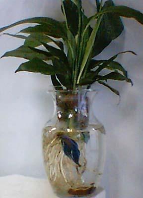 Peace On earth Bouquet