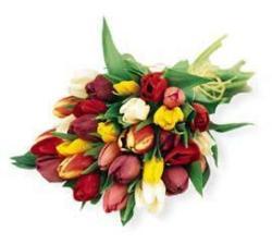 Mixed Tulip Bouquet
