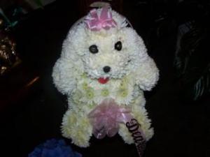 Pequa Puppy