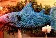 Pequa Shark Arrangment