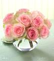 Esperance Roses