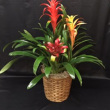 Triple Bromeliad Basket