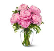 Pink Peony Special