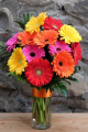 One Dozen Gerbera Daisies-TUESDAY SPECIAL PRICE