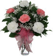 Half Dozen Carnations-WEDNESDAY SPECIAL PRICE
