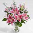 Half Dozen Stargazers-THURSDAY SPECIAL PRICE