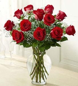 Red Rose SPEC IAL!