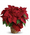 Red Poinsettia Basket-Small