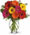 The Gerbera Brights Bouquet