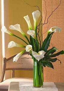 Elegant Calla Lilies