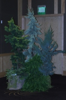 Rental Mixed Foliage Display