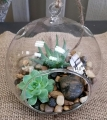 Terrarium Medium