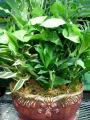 15 Inch Porcelain/Ceramic Dish Garden