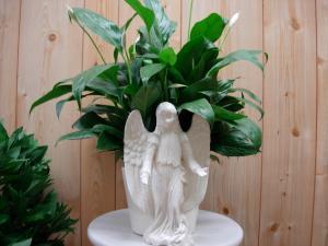 CCF Angel Planter