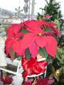 CCF Christmas Poinsettia