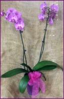 Caan Floral - Opulent Orchid