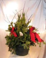 Caan Floral - Evergreen Outdoor Planter