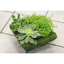 Dish Garden Arrangement