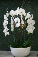 Cascade Orchid Planter