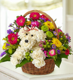 Doggy Basket