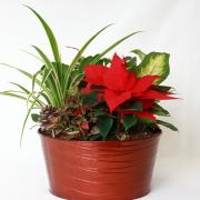 Festive Red Tin Planter