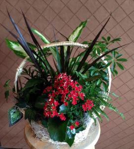 Exotic Basket