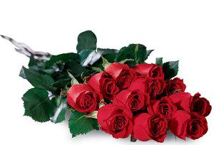 Dozen Fresh Cut Roses