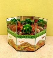 Cactus Garden 1A