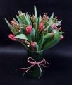 Oleander's Spring Time Tulips
