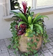 Tropical Summer Planter