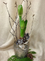Oleander's Festive Amaryllis