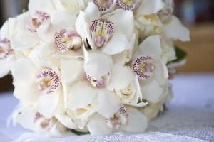 Bridal White Cymbidiums