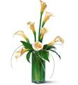 Fleurs de Callas Blancs