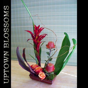 Uptown Tropical Business 1