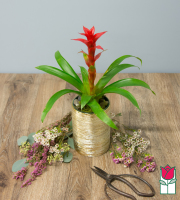 The Beretania Florist Mini Bromeliad