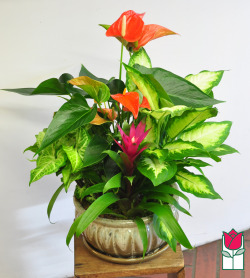 Beretania's Extra Large Blooming Planter