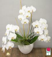Triple Premium Phalaenopsis Orchid in Designer Pot - White